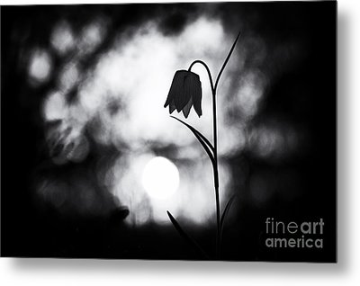 Snakes Head Fritillary Monochrome Metal Print by Tim Gainey