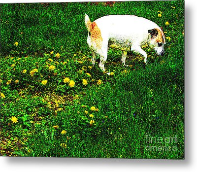 Sniffin The Dandelions Metal Print by Minding My  Visions by Adri and Ray