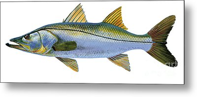 Snook Metal Print by Carey Chen