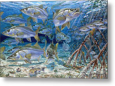 Snook Cruise In006 Metal Print by Carey Chen