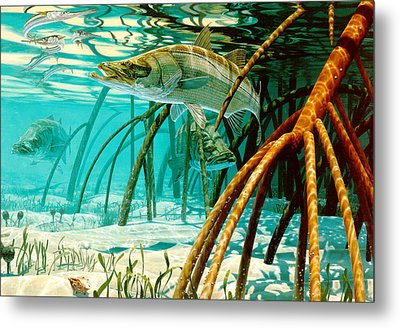 Snook In The Mangroves Metal Print by Don  Ray