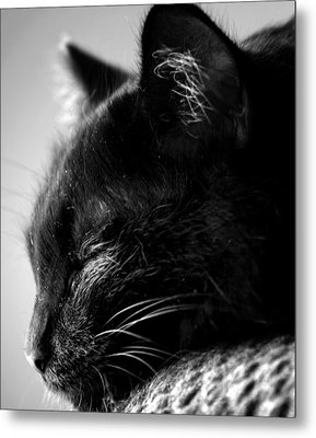 Snooze Metal Print by Camille Lopez