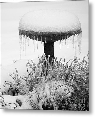 Snow And Ice Served-up Metal Print by MaryJane Armstrong