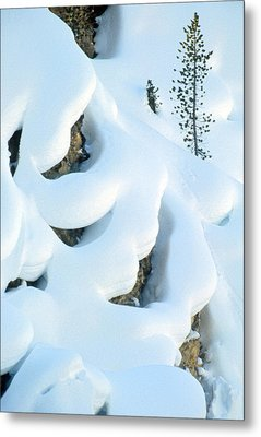 Snow And Tree Metal Print by Judi Baker