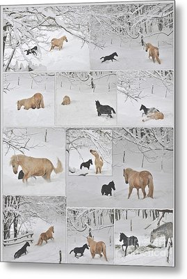 Snow Angels Paso Fino Style Metal Print by Patricia Keller