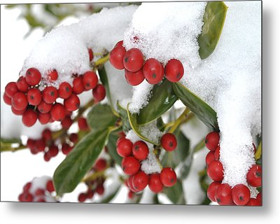 Snow Berries Metal Print