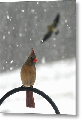 Snow Bird II Metal Print by Diane Merkle