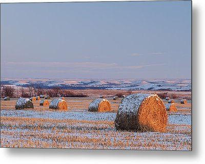 Snow Covered Bales Metal Print by Scott Bean