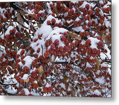 Snow Covered Berries Metal Print