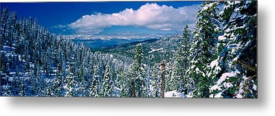 Snow Covered Pine Trees In A Forest Metal Print by Panoramic Images