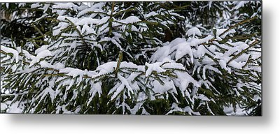 Snow Covered Spruce Tree - Featured 2 Metal Print by Alexander Senin