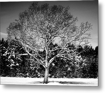 Snow Covered Tree Metal Print