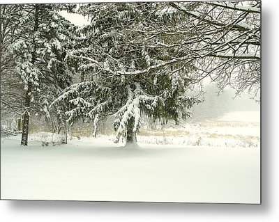 Snow-covered Trees Metal Print by Lars Lentz