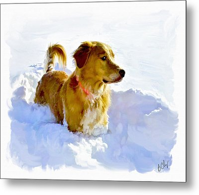 Snow Dog Metal Print by Bradley Clay
