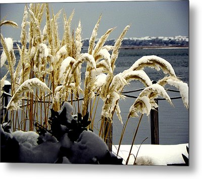 Snow Dust Metal Print by Karen Wiles