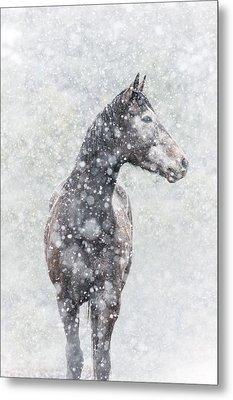 Snow Flurry Metal Print by Pamela Hagedoorn