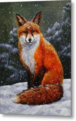 Snow Fox Metal Print by Crista Forest