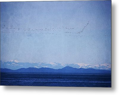 Metal Print featuring the photograph Snow Geese Over The Ocean by Peggy Collins