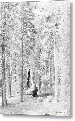 Snow Impressions Metal Print by Angela Stanton