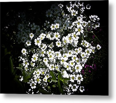 Metal Print featuring the photograph Snow In Summer by Joann Copeland-Paul