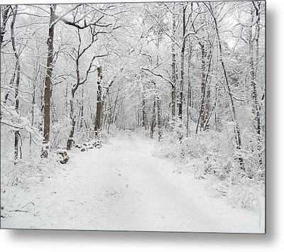 Snow In The Park Metal Print by Raymond Salani III
