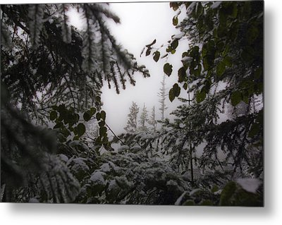 Metal Print featuring the photograph Snow In Trees At Narada Falls by Greg Reed