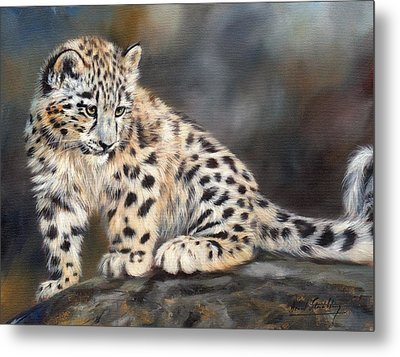Snow Leopard Cub Metal Print by David Stribbling