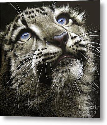 Snow Leopard Cub Metal Print by Jurek Zamoyski