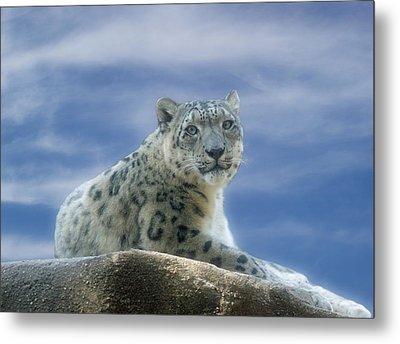 Snow Leopard Metal Print by Sandy Keeton