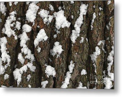 Snow On Pine Bark Metal Print
