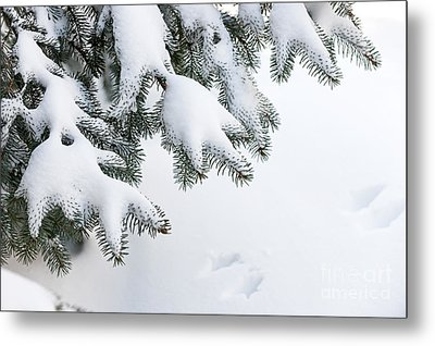 Snow On Winter Branches Metal Print
