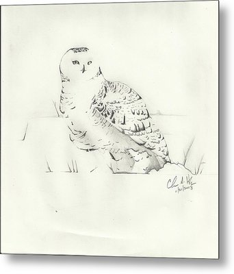 Snow Owl In Field Metal Print by Christopher Hughes