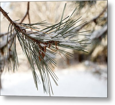 Metal Print featuring the photograph Snow Pine by Courtney Webster