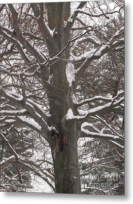 Metal Print featuring the photograph Snow Tree by Melissa Stoudt