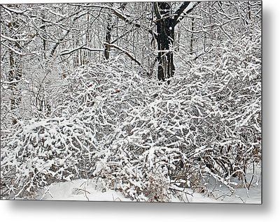 Snow White Bushes Metal Print