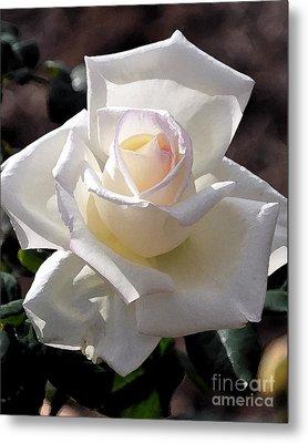 Snow White Rose Metal Print