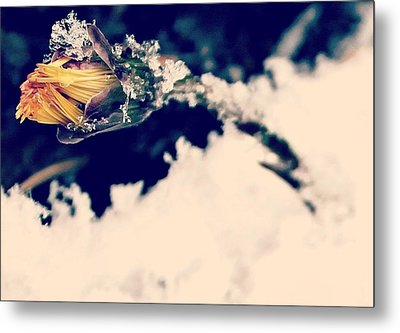 Metal Print featuring the photograph Snow Wildflower by Candice Trimble