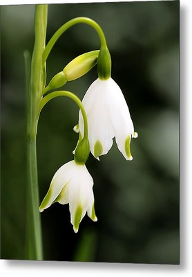 Snowbells In Spring Metal Print by Rona Black