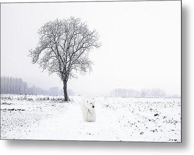 Snowbird Metal Print by Daniel Hagerman