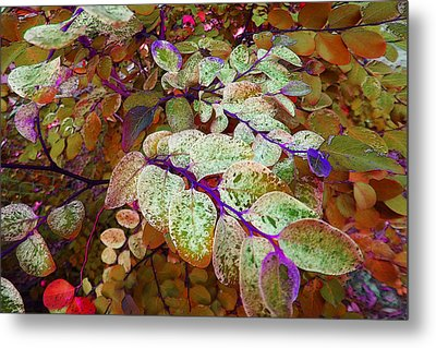 Metal Print featuring the photograph Snowbush by Ginny Schmidt