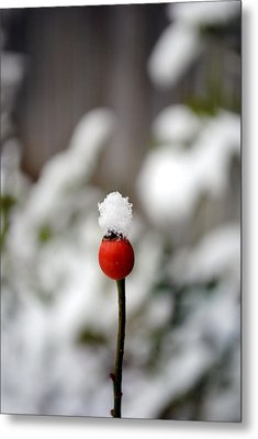 Metal Print featuring the photograph Snowcap by Kelly Nowak