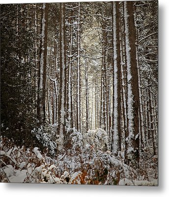 Metal Print featuring the photograph Snowed Forest by Antonio Jorge Nunes