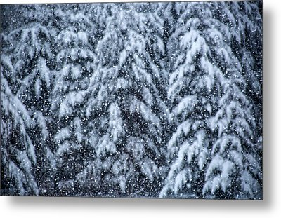 Metal Print featuring the photograph Snowflakes by Dennis Bucklin