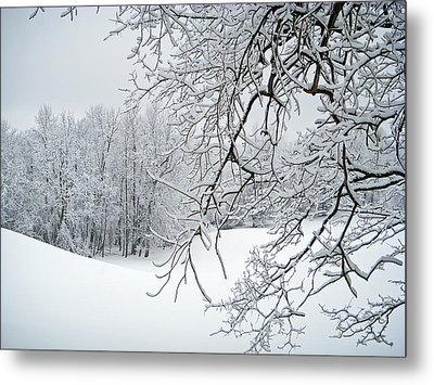 Snowy Branches Metal Print by Aimee L Maher Photography and Art Visit ALMGallerydotcom