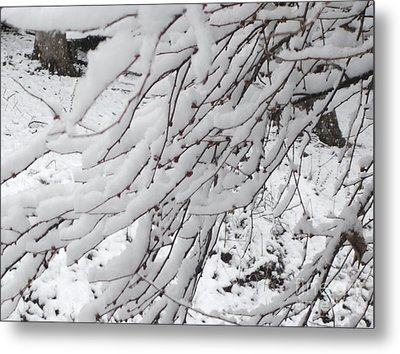 Metal Print featuring the painting Snowy Branches by Donna Dixon