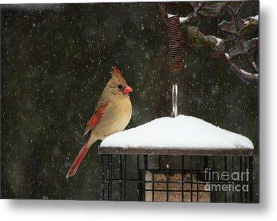 Snowy Cardinal Metal Print by Benanne Stiens
