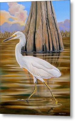 Snowy Egret And Cypress Tree Metal Print by Phyllis Beiser
