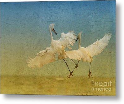 Snowy Egret Dance Metal Print