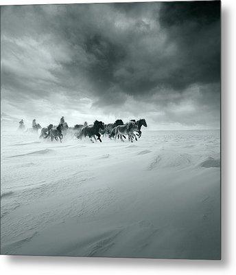 Snowy Field Metal Print