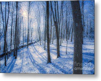 Snowy New England Forest Metal Print